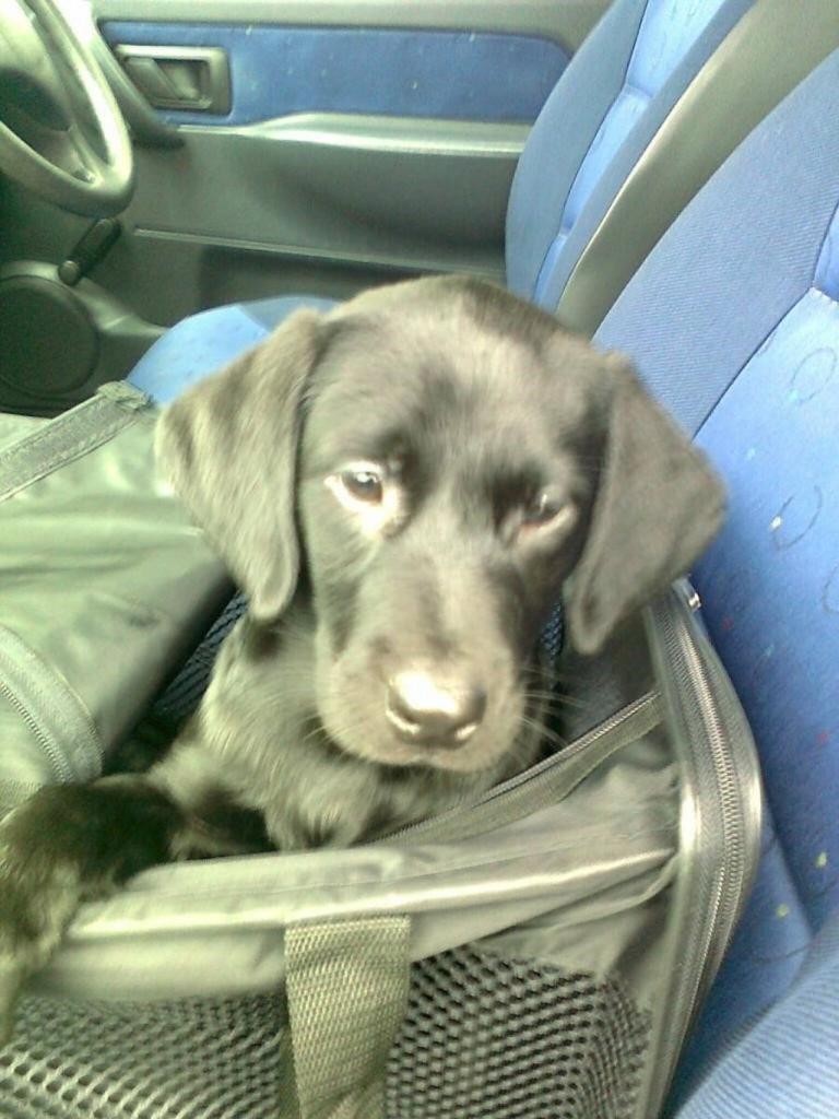 28.09.2012: Naomi im Handgepäck