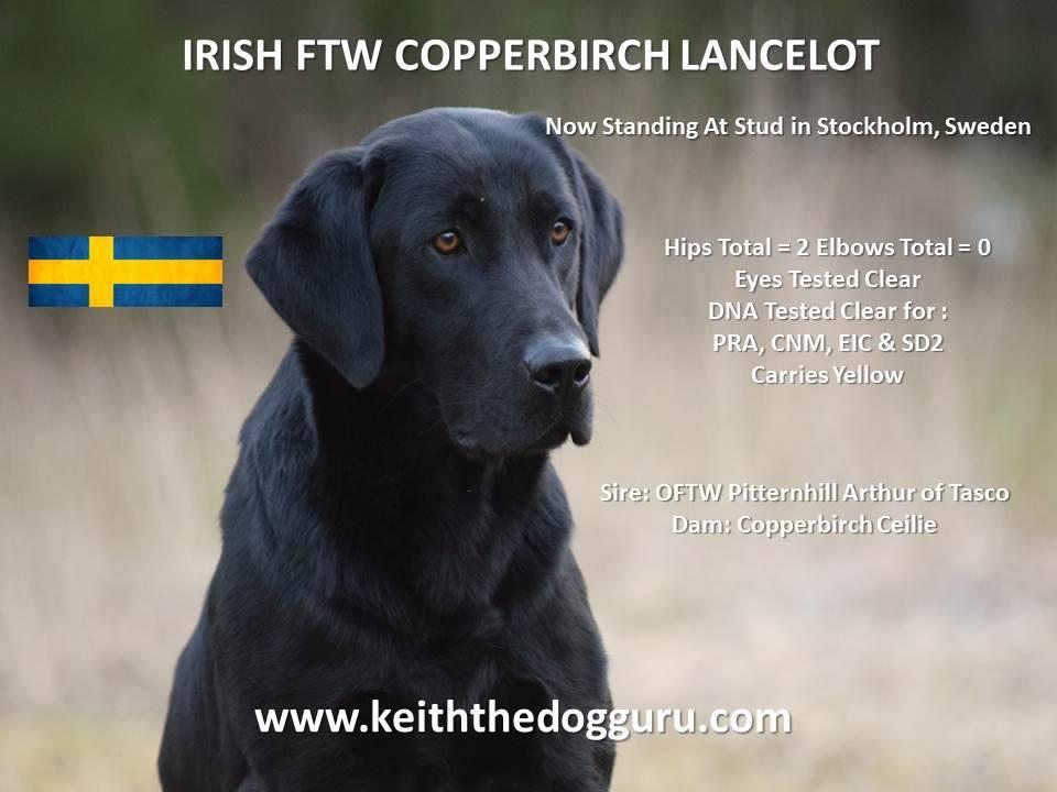 26.01.2018 – FTW Copperbirch Lancelot – der Deckrüde für B-Wurf mit Copperbirch Naomi steht nun fest