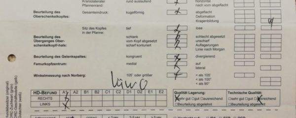 22.11.2019 – Röntgenergebnisse Branda sind da A1/A1  –  0/0